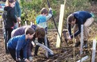 DOWN TO EARTH – young and old people from Pyrford join in with the hard graft of tree planting