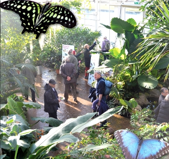 FEELING THE HEAT – visitors to the steamy Glasshouse try to spot more elusive butterflies