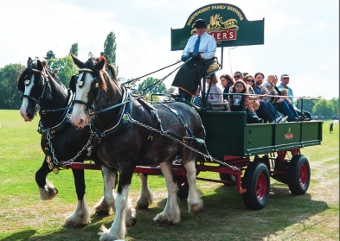 SHIRE HORSES - did their bit ferrying visitors in the old manner